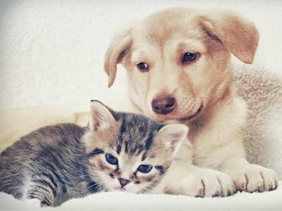 Paws for a Good Cause – Pet Adoption Drive